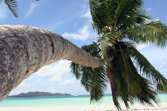 Sydhavsdrømmen på Seychellene.