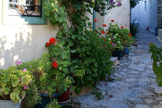 På Alonissos finnes vakker og blomstrende natur.