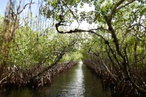 På alligatorjakt i Everglades