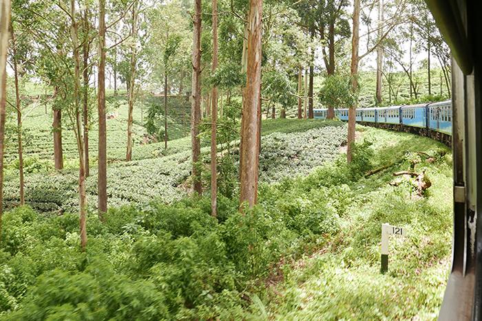 Bildetekst: Utsikt fra togvindu. Grønne, frodige omgivelser og et glimt av det blå toget.