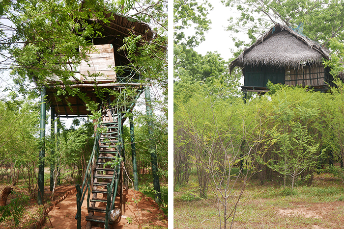 Bildetekst: Bilde av en tretopphytte på Sri Lanka