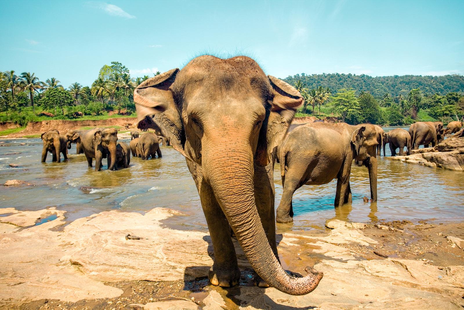 5 heftige opplevelser på Sri Lanka