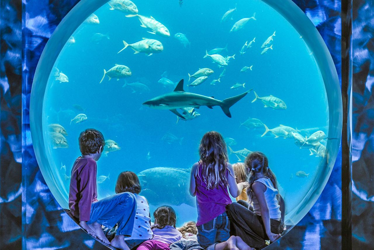6 familievennlige opplevelser i Dubai